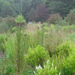 Jamie Purinton, Commercia Landscape Architecture, mountain top arboretum rain garden