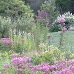 Jamie Purinton, Commercia Landscape Architecture, mountain top arboretum rain garden summer blooms