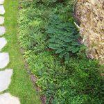 Jamie Purinton, Landscape Architecture, Residential, Woodland, Hillsdale New York