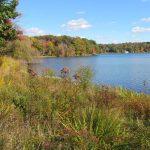 Jamie Purinton Landscape Architecture, lake shore plantings Lakeville, CT