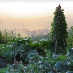 Jamie Purinton Landscape Architecture, vegetable garden hillsdale