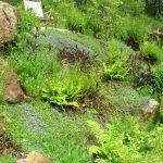 Jamie-Purinton-Residential-Landscape-Architecture,-Bank-plantings,-Salisbury-CT